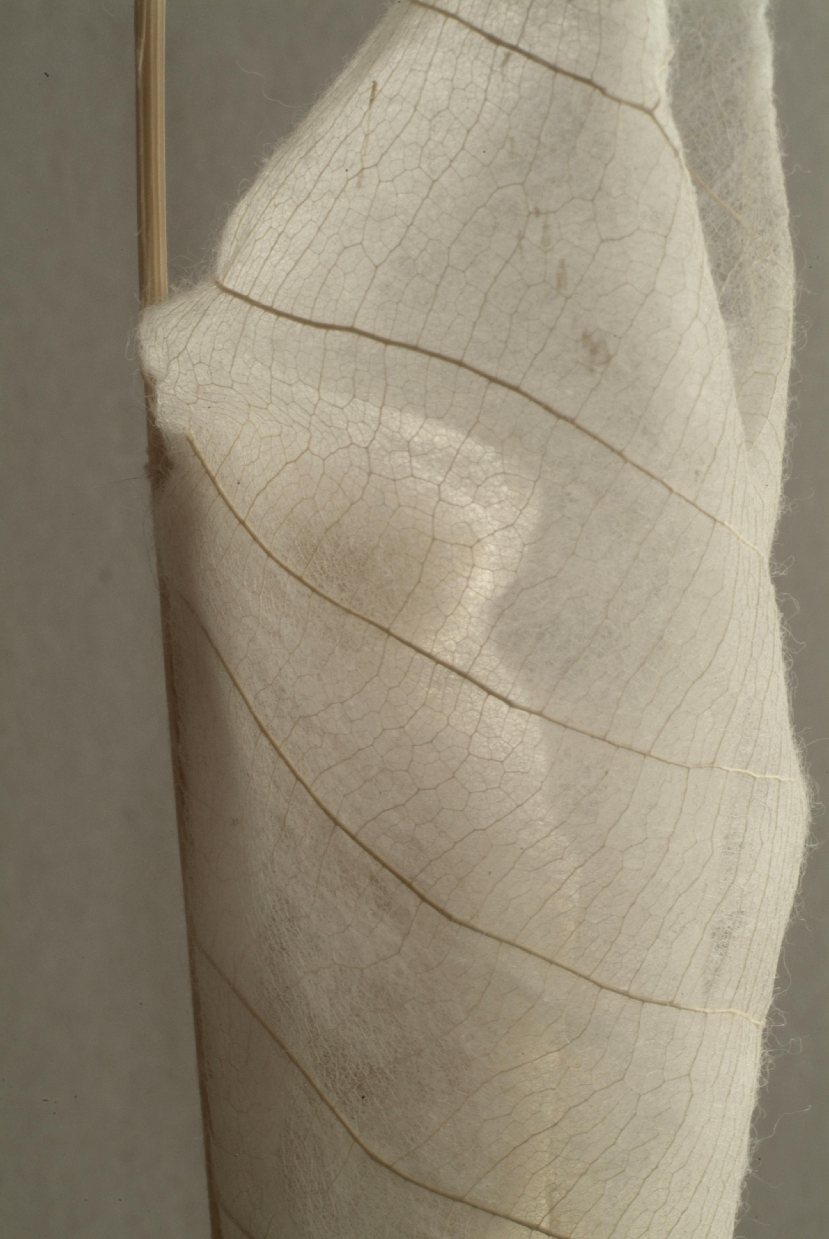 Verblätterung 1, verhüllt, Detail, 2017